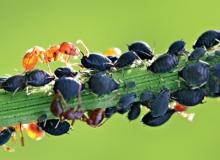 СРЕДСТВА ОТ ВРЕДИТЕЛЕЙ (Инсектици́ды)