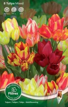 Тюльпан Многоцветковый смесь окрасок