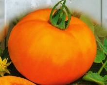Томат Апельсин (ЧБ) 0,1гр.