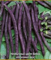 Фасоль овощная Румба (ЧБ) 20 шт