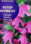 Клематис ботанический Хете Хешелл