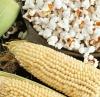 Кукуруза Сахарная (лопающаяся) Белое облако (ЧБ) 10 гр