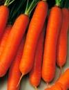 Морковь Нандрин F1 (ЧБ) 0,5гр.