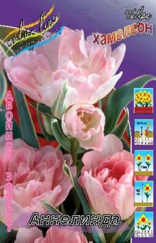 Тюльпан многоцветковый Аннелинда Двойной эффект